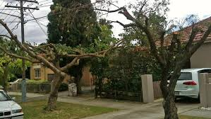 street tree pruning